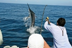 Cabo San Lucas Sport fishing, Sport fishing Cabo San Lucas, cabo san lucas tours, los cabos tours, cabo san lucas activities, los cabos activities, Marlin fishing, Tuna fishing, Dorado fishing, deep sea fishing, fly fishing