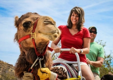Ride the Best Camels Safari tour in Los Cabos at Wild Canyon Cabo San Lucas Mexico