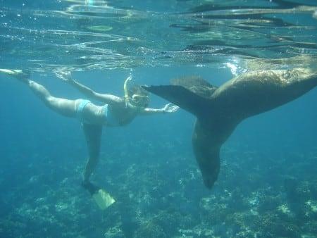 Snorkel Cabo Sealion Bikini play Santa Maria Bay