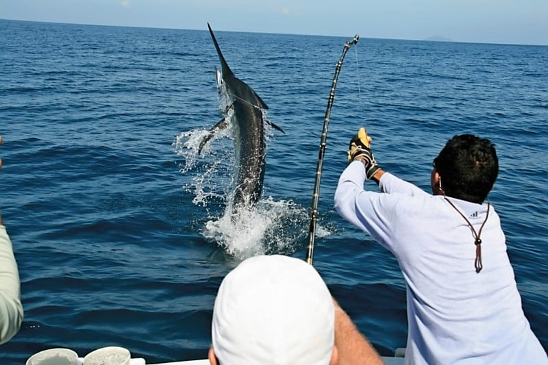 Cabo fishing charters fishing in cabo san lucas cabo for Big game fishing